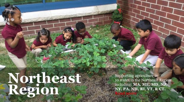 NJ Agricultural Society Learning Through Gardening Program - Kids picking strawberries